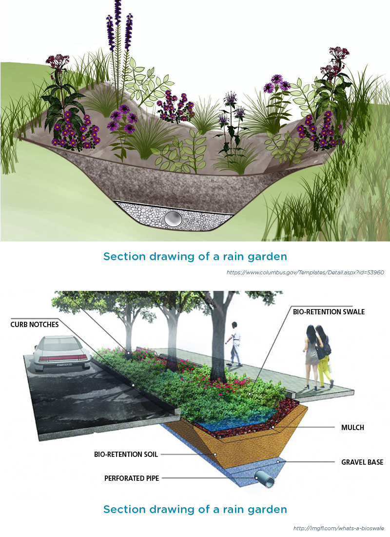 Capturing Water Cooling The Air Rain Gardens